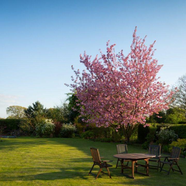 gardener-lawn-tree
